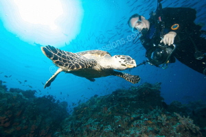 A hawksbill turlte in the strobe lights of divers by Barbara Schilling 